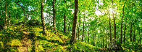 Wald in der Eifel