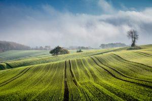 Felder / Landwirtschaft