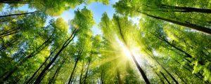 Sonnenschein in Baumwipfeln