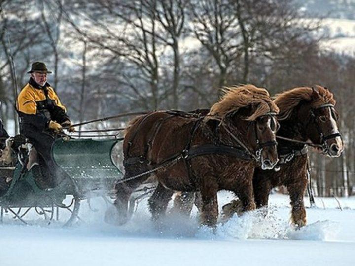 Die 5 besten… Pferdeschlittenfahrten durch die verschneite Eifel